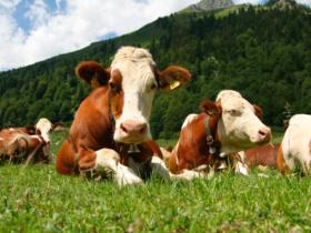 prodotti a base di animali